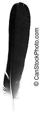 macro shot of black feather isolated on white