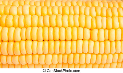 Macro shot of corn used for ethanol fills the frame - macro ...