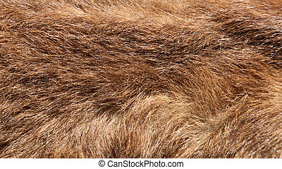 Macro shot of cows fur. Suitable for background use.