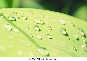 Macro shot of drops on the leaves