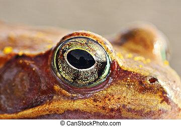 macro shot of frog eye