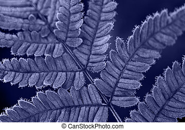 Macro shot of frozen fern