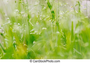 Macro shot of grass with seeds