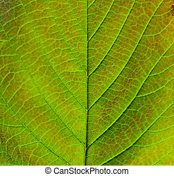 Macro shot of green leaf