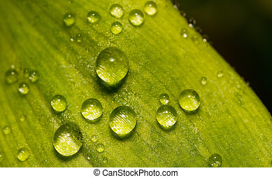 Macro shot of green leaf with morning dew.