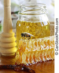 honey bee on a honeycomb - macro shot of honey bee on a...
