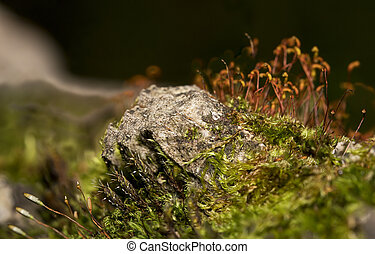Macro shot of moss sprouts in the forest.