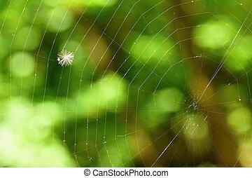Macro shot of nature. Dandelion in spider web.