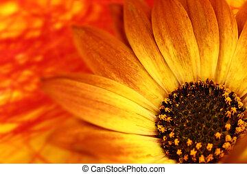 Macro shot of orange flower with petals and pollen