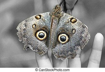 Macro shot of Owl butterfly (Caligo)