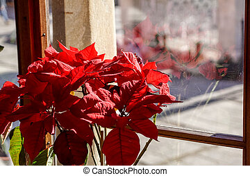 Macro shot of red flower in a vase, perched on a sunlit window sill.