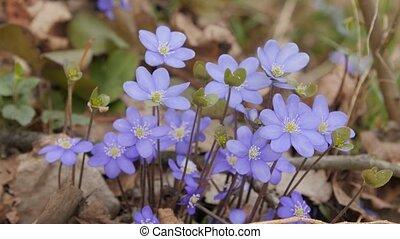 Macro shot of violets flowers.