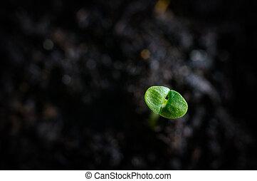Macro shot of young seedling in soil