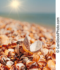 Open seashell lying on sall shells cover in front of horizon...