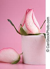 macro shot pink rose with dew drops