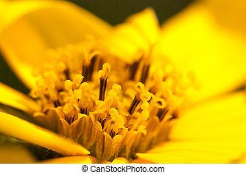 Macro shot yellow flower closeup summer background