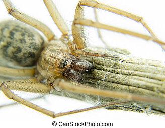 macro spider climb on a branch