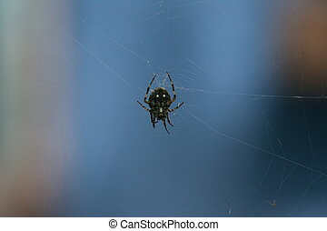 macro closeup small Spider