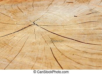 Macro texture of wood