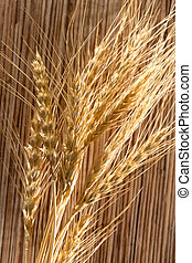macro, trigo, orelhas