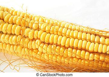 Macro view of corn cob