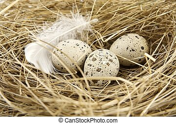 Macro view of easter quail eggs in the nest