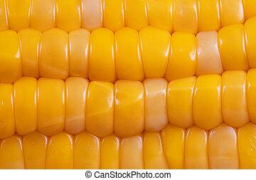 Macro view of fresh raw corn.