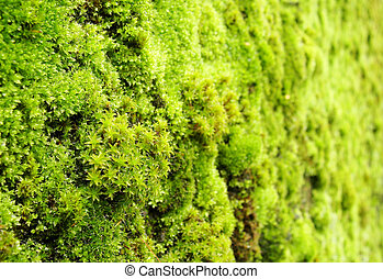 macro view of green moss on a wall