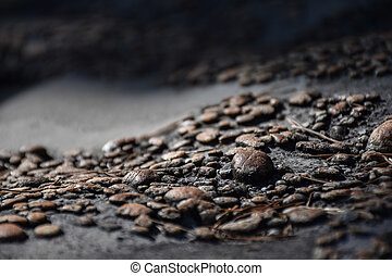 Macro view of small brown pebbles on a rock