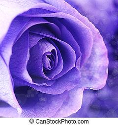 macro, viooltje, achtergrond, rozen, mooi