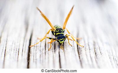 Macro wasp on wooden floor.
