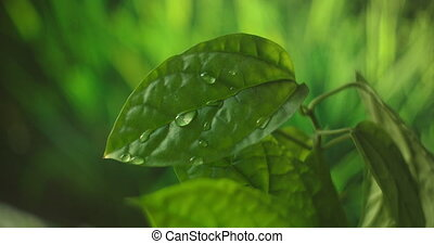 Macro. Waterdrop. Water Drop Leaf Environmental Conservation Balance Green Nature. Drop of dew in morning on leaf with sun light.
