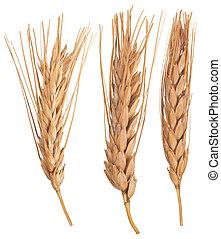 macro, wheat., orelhas