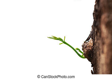 Macro young tree branch isolated on white background