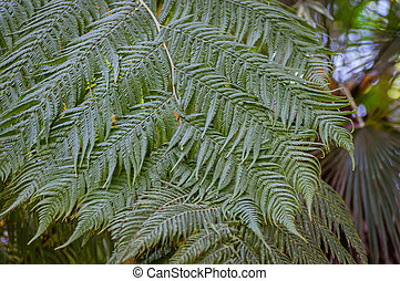 macrophotography, variëteit, flora, ferns., varen, groene, ...