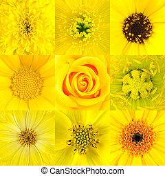 macros, květ, devět, vybírání, zbabělý