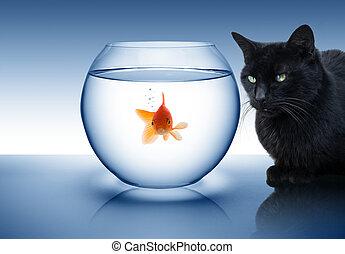 macska, aranyhal, fekete, veszély, -