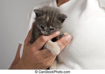 macska, -, cica, alatt, nő, kéz