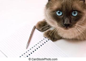 macska, előtt, jegyzetfüzet