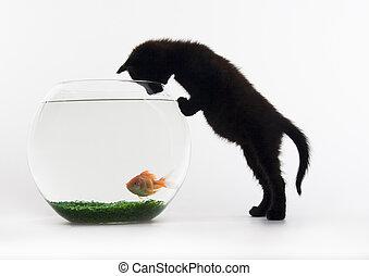 macska, &, fish