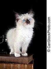 macska, képben látható, előjegyez