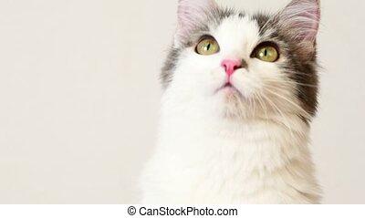 macska, néz, mindenfelé, követ, valami, closeup