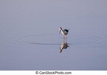 madár, átgázol