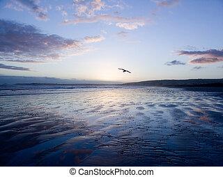 madár, csúszás, felett, homok