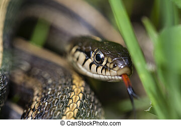 mad garter snake