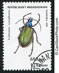 insect - MADAGASCAR - CIRCA 1993: stamp printed by ...