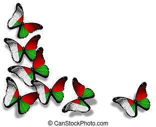 Madagascar flag butterflies, isolated on white background