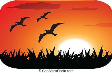 madarak, árnykép, noha, napnyugta