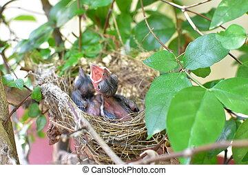 madarak, várakozás, helyett, a, anya, to élelmez