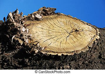 madeira, círculo